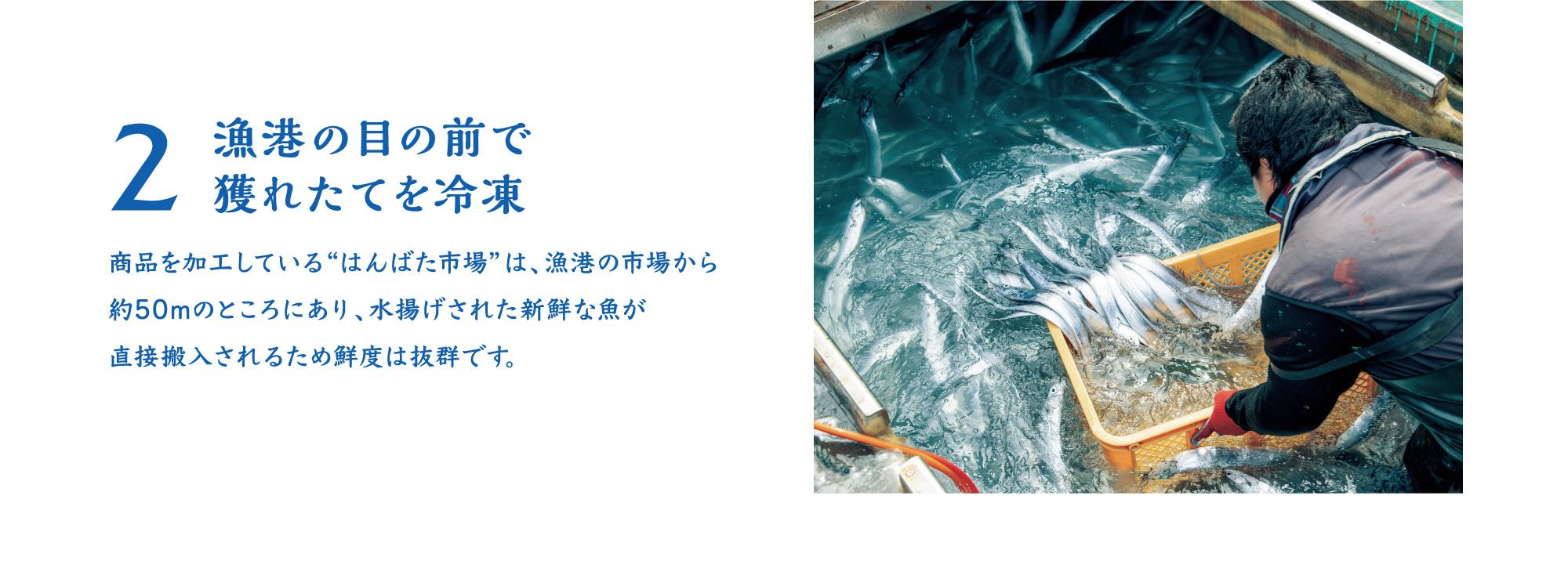 """2漁港の目の前で 獲れたてを冷凍 商品を加工している""""はんばた市場""""は、漁港の市場から 約50mのところにあり、水揚げされた新鮮な魚が 直接搬入されるため鮮度は抜群です。"""