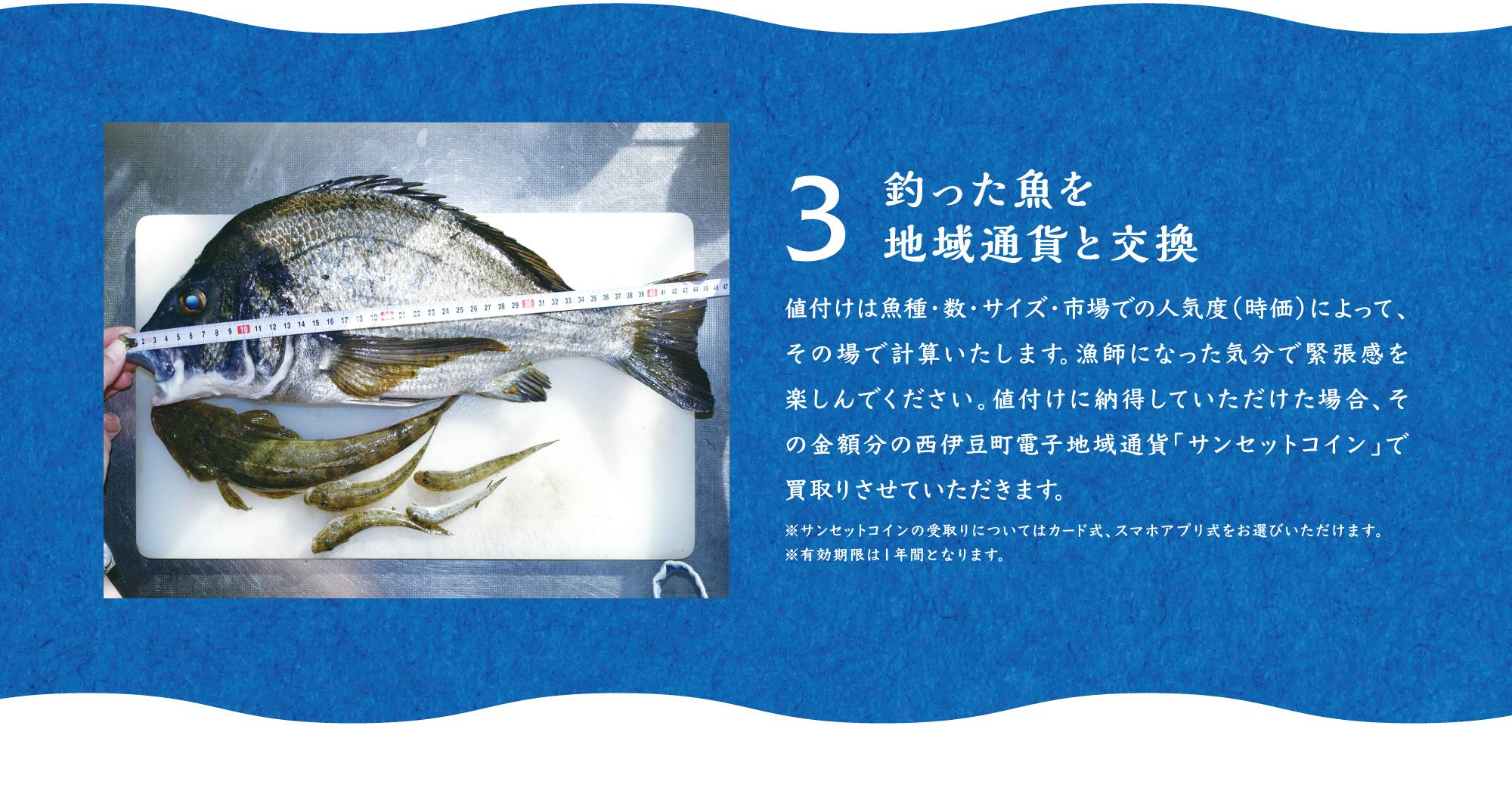3.釣った魚を地域通貨と交換 値付けは魚種・数・サイズ・市場での人気度(時価)によって、その場で計算いたします。漁師になった気分で緊張感を楽しんでください。値付けに納得していただけた場合、その金額分の西伊豆町電子地域通貨「サンセットコイン」で買取りさせていただきます。 ※サンセットコインの受取りについてはカード式、スマホアプリ式をお選びいただけます。 ※有効期限は1年間となります。